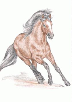 Tábory u koní, tábory s koňmi, jízda na koních, vyjížďky na koních, letní tábory pro děti