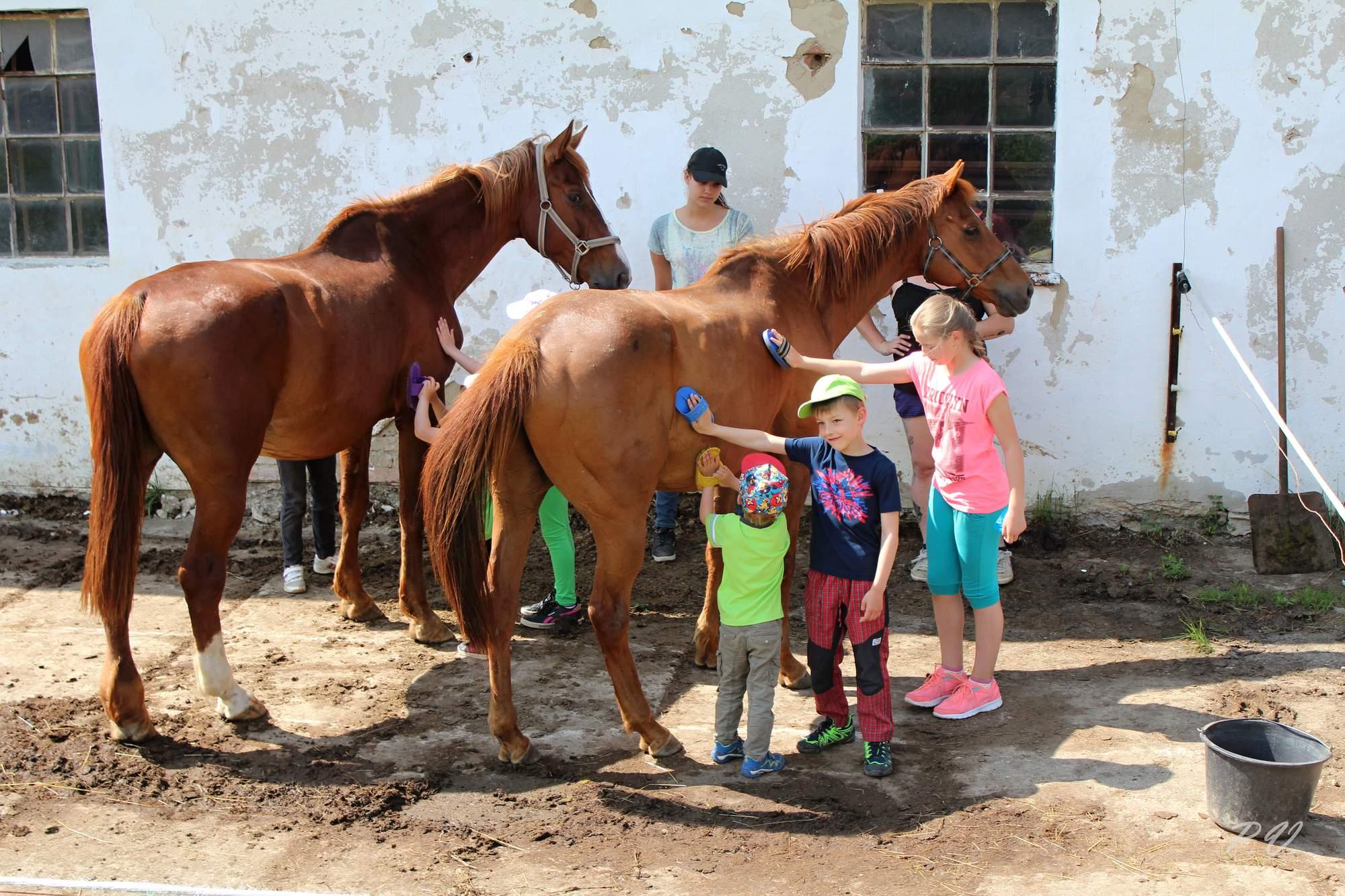 tábory u koní, tábory s koňmi, jízda na koních, vyjížďky na koních, Valašské klobouky, Valašsko, Vsetín, zábava pro děti