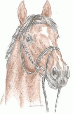 kun lenka somanova staj lipina valasske klobouky - Tábory u koní, tábory s koňmi, jízda na koních, vyjížďky na koních