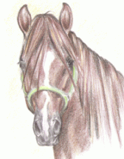 kun lenka somanova staj lipina dostihy krekov - Tábory u koní, tábory s koňmi, jízda na koních, vyjížďky na koních