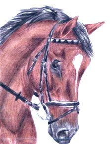 staj lipina kun lenka somanova - Tábory u koní, tábory s koňmi, jízda na koních, vyjížďky na koních