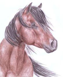kun lenka somanova lipina valasske klobouky letni tabory - Tábory u koní, tábory s koňmi, jízda na koních, vyjížďky na koních